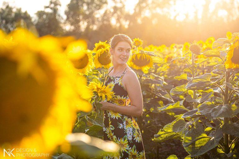 Fotoshooting Sonnenblumen Mommenheim